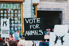 """ Vote For Animals "" Banner At..."