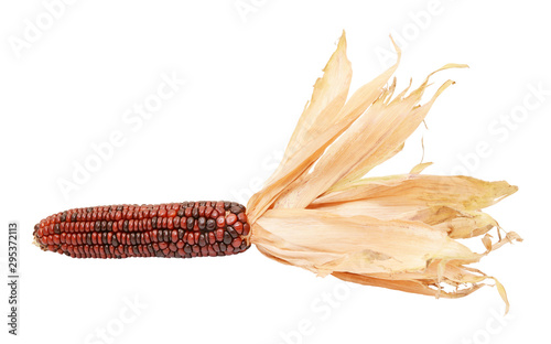 Photo Deep red and brown Indian corn with papery dried husks