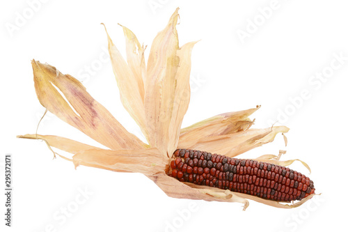 Valokuva Dried papery husks around a deep red Fiesta sweetcorn