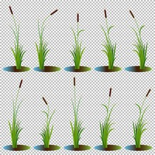 Set Of 10 Variety Reeds With L...