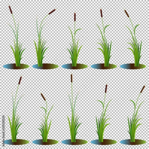 Fotografía Set of 10 variety reeds with leaves on stem