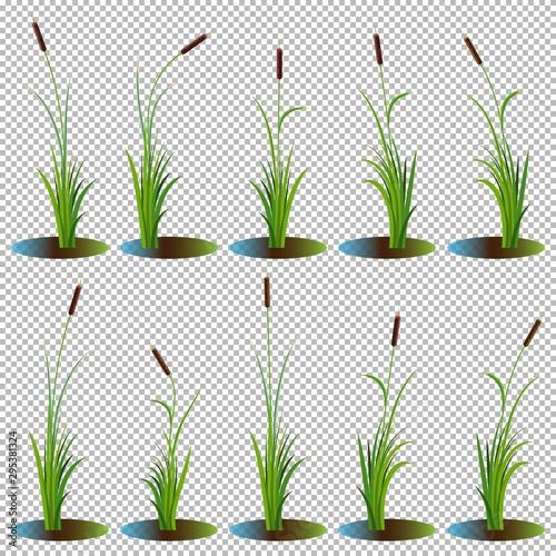 Set of 10 variety reeds with leaves on stem Billede på lærred
