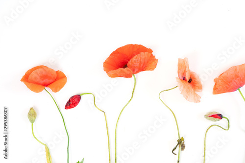 Montage in der Fensternische Mohn red poppy flowers