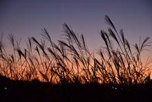 【秋イメージ】夕焼け空に揺れるススキ