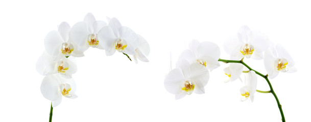Naklejka na ściany i meble Blooming white orchids flower isolated on white background