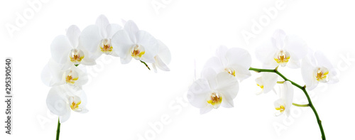 Autocollant pour porte Orchidée Blooming white orchids flower isolated on white background
