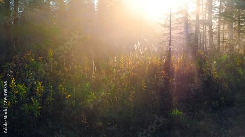 Montage in der Fensternische Schwarz Beautiful sunset in the autumn forest. Colorful landscape.