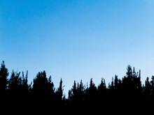 Blue Sky With Dark Trees