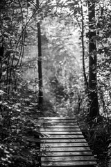 Panel Szklany Czarno-Biały Walkway in the woods