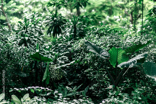 Horizontal shot of green tropical jungle in the daytime Canvas Print