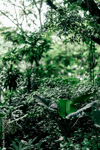 Vertical shot of green jungle in the daytime. Tropical rainforests make up one of Earth's largest biomes and contain a diverse array of vegetation and other life. Nature and plants concept. Wall mural