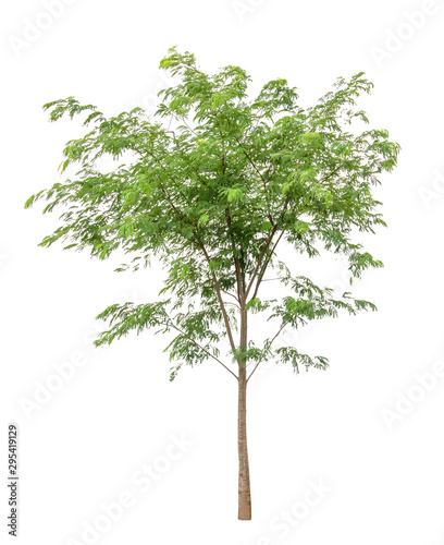 Green Tree isolated on white background Slika na platnu