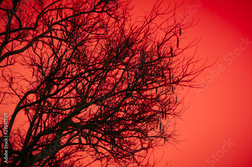 Foto auf AluDibond Rot Halloween dead tree branches and orange moonlight background.