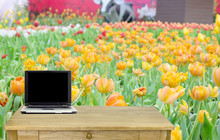 The Desk In Flower Garden Back...