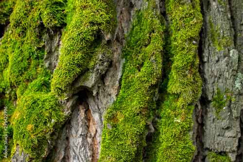 Background of tree bark and green moss.
