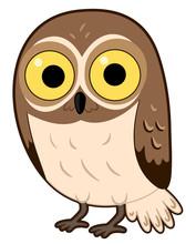 Animal Desert Elf Owl Illustra...