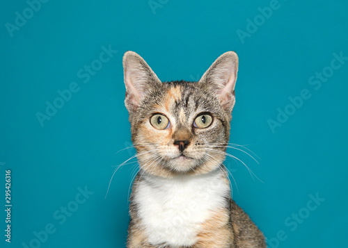 Photo  Close up portrait of a wide eyed calico kitten looking directly at viewer with surprised expression