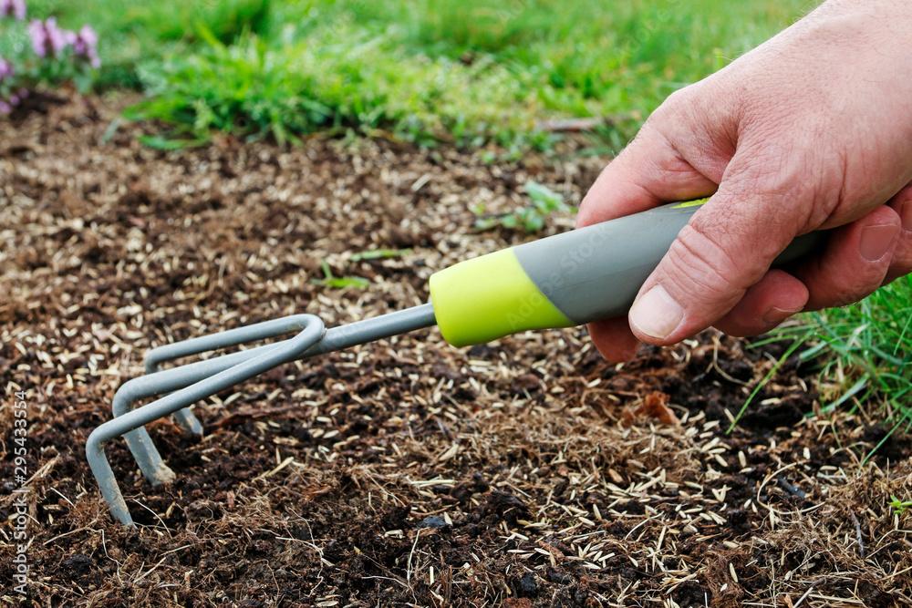 Fototapety, obrazy: Man rakes the seeds of grass in fresh soil.