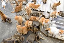 写真素材:猫、複数、...
