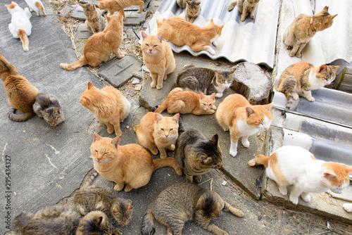写真素材:猫、複数、たくさん、猫島、青島、愛媛県、日本 - 295434327