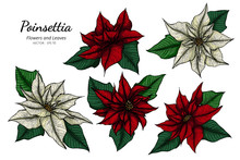 Collection Set Of Poinsettia F...