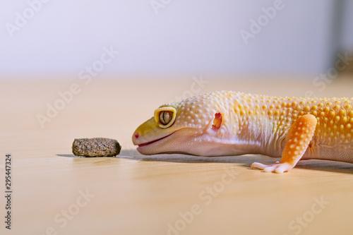 Photographie 餌を食べようとしているレオパルドゲッコー、爬虫類のペット