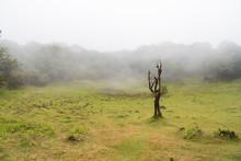 Like A Human Figure, Dead Stinkwood Tree