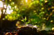 Leinwanddruck Bild - Plant,Seedlings grow in soil with sun light. Planting trees to reduce global warming.
