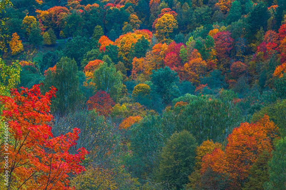 Fototapety, obrazy: Aerial Drone view of colorful top of the forest at Autumn