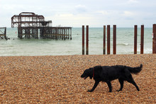 Brighton West Pier. The Dereli...