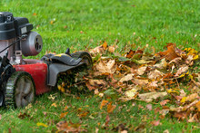 Lawn Mover Mulching Up Fall Le...