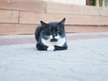 Black And White Cat Lies On Th...