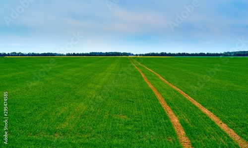 Foto op Plexiglas Groene agricultural landscape of the hilly field with green shoots of plants against the background of the blue sky