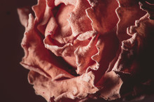 Close Up Of Rose Petals In Soft Light