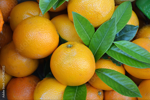 Fotografie, Obraz Citrus fruits in the lemon greenhouse in Limone sul Garda - Italy