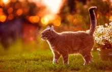 Portrait Of A Cute Striped Cat...