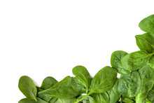 Corner Background From Fresh Spinach Leaves Isolated On White, Copy Space, High Angle Top View From Above