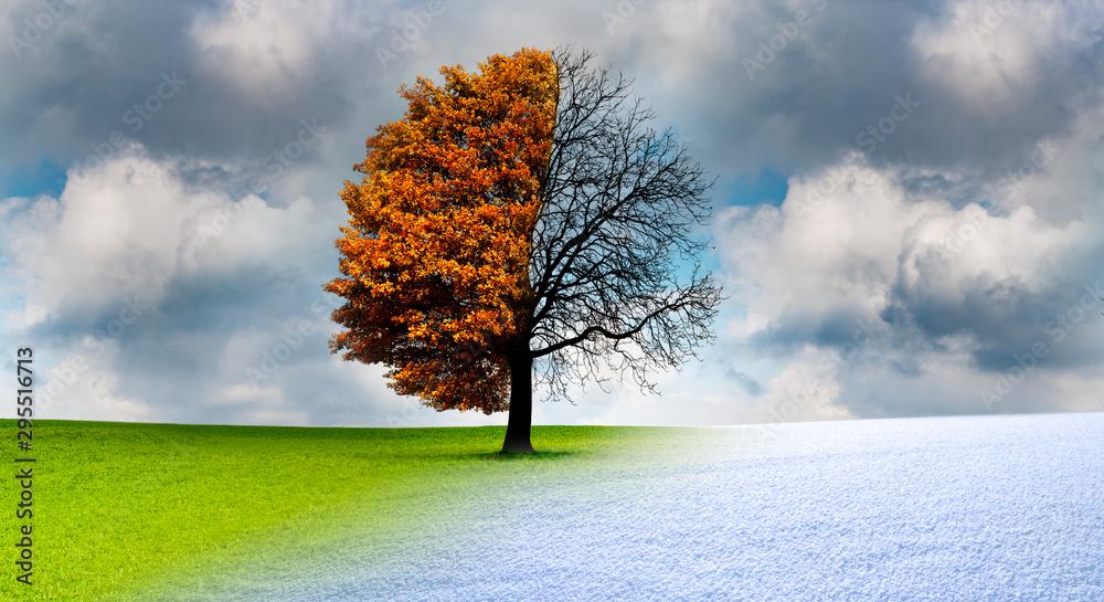 Fototapety, obrazy: Baum im Wechsel der Jahreszeiten