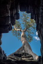 "Preah Khan Aka The ""Temple Of"