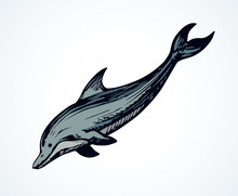 Dolphin. Vector Drawing