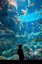 Toronto's Aquarium