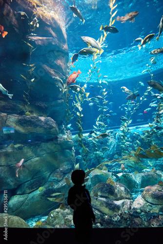 Photo Toronto's Aquarium