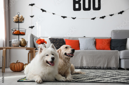 Cute dogs in room decorated for Halloween Wallpaper Mural