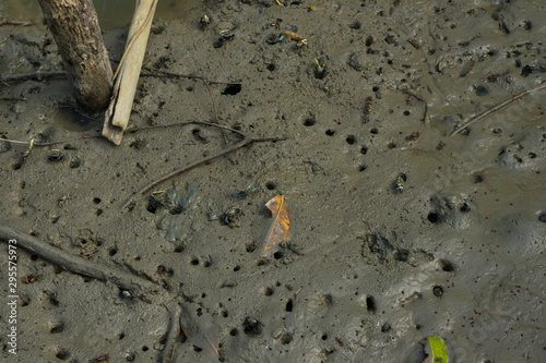 Photo Many Fiddler Crab (Uca forcipata) or Ghost crab emerging from its burrow and walking on mudflats in mangrove forest during low tide
