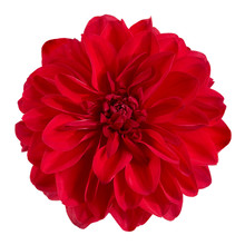 Dahlia Flower, Red Dahlia Flow...