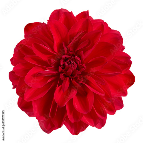 Poster de jardin Dahlia Dahlia flower, Red dahlia flower isolated on white background, with clipping path