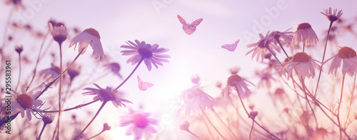 Foto op Canvas Londen Marguerite daisies with butterflies on meadow at sunset. Spring flower.