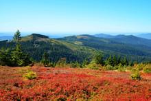 Autumn Landscape In National P...