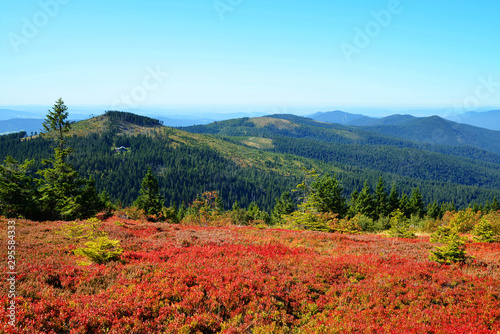 Autumn landscape in National park Bayerischer Wald, view from the mountain Grosser Arber, Germany Canvas Print