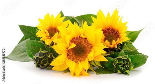 Poster de jardin Tournesol Group of yellow bright beautiful sunflower flowers.